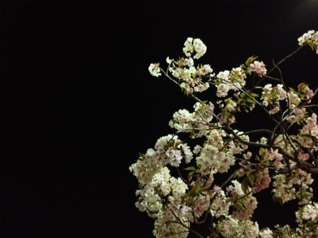 桜の通り抜け 造幣局