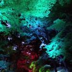 下鴨神社 TEAM LAB 呼応する木々