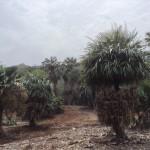 ココクレーター植物園 ハワイ