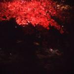夜間拝観 高台寺